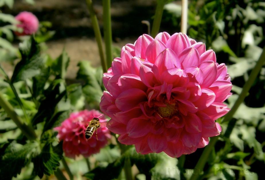 méhecske akcióban